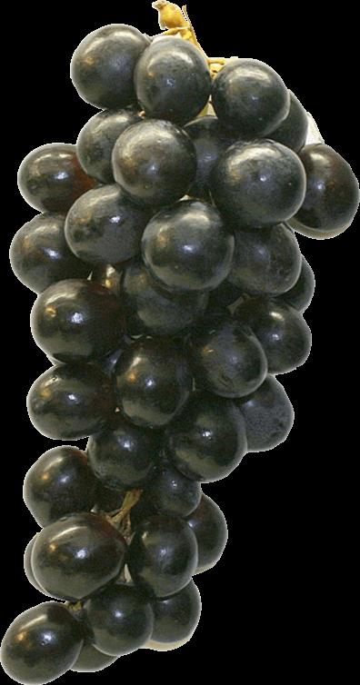 Eine freigestellte rote Weintraube.