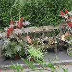 Dekoration mit Blumen und Pflanzen einem alten Bollerwagen einem Eichenfass und einer Bank vor der Panorama Pension Ahrklause Dernau.